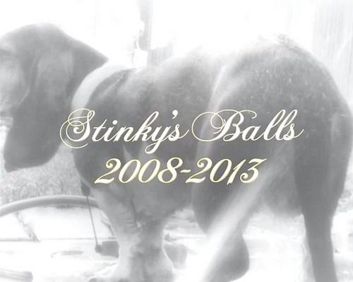 R.I.P. Stinky's Balls